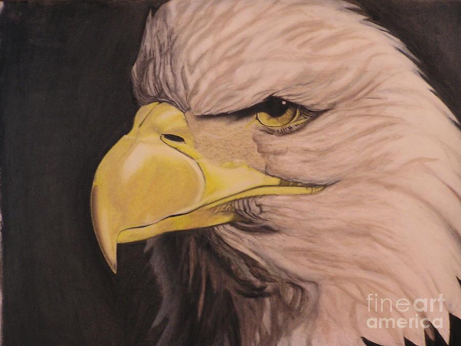 Bald Eagle Pastel