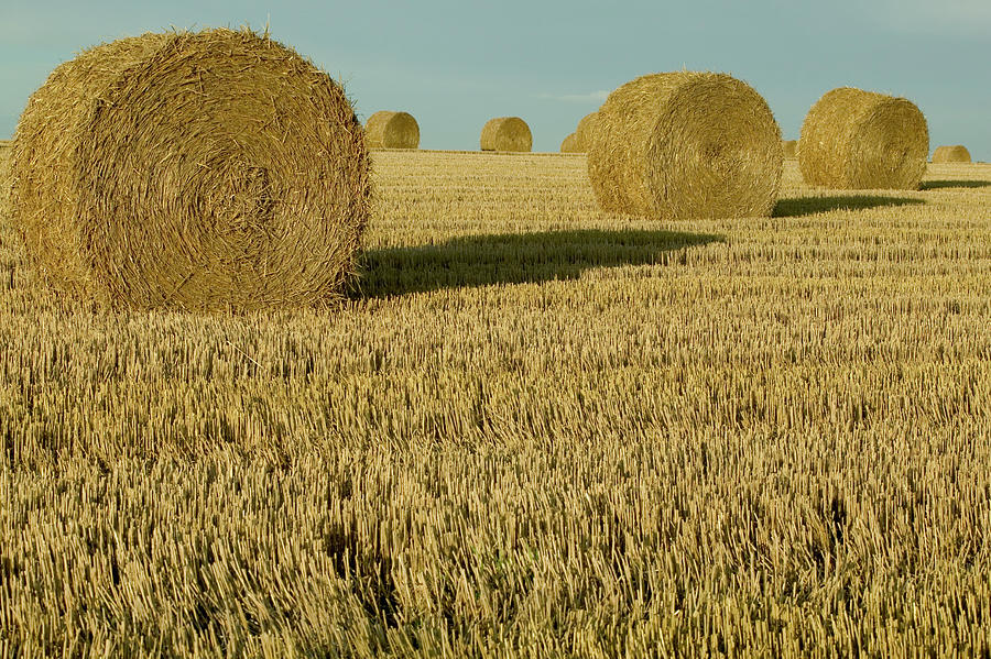 Bales Of Grain At Harvest Time Photograph  - Bales Of Grain At Harvest Time Fine Art Print