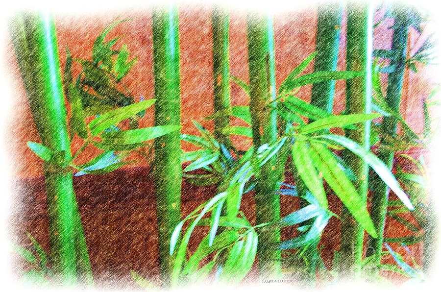 Bamboo #1 Photograph
