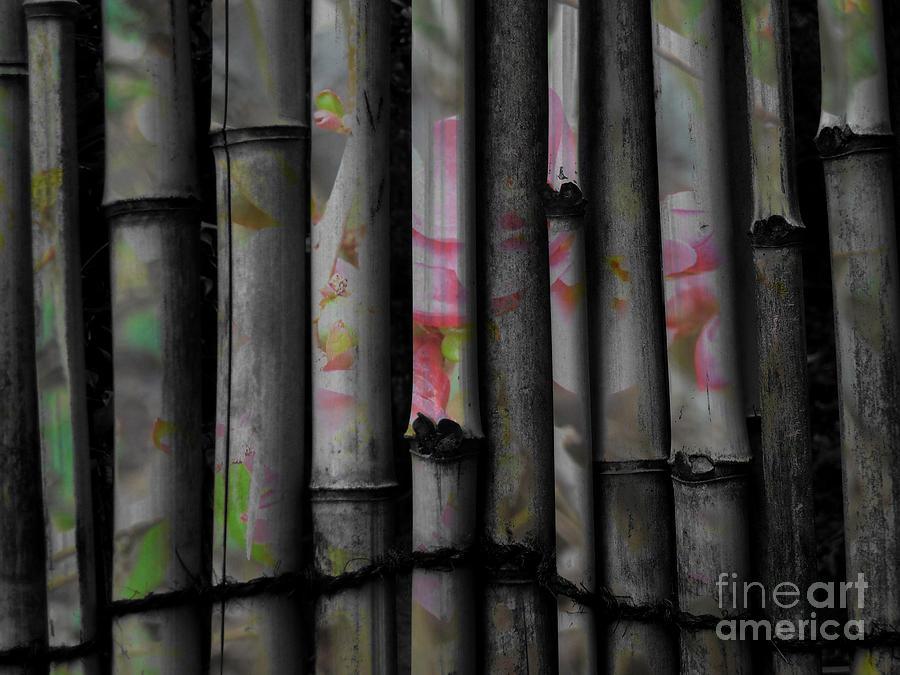 Bamboo Photograph - Bamboo Blossom by Charles Majewski