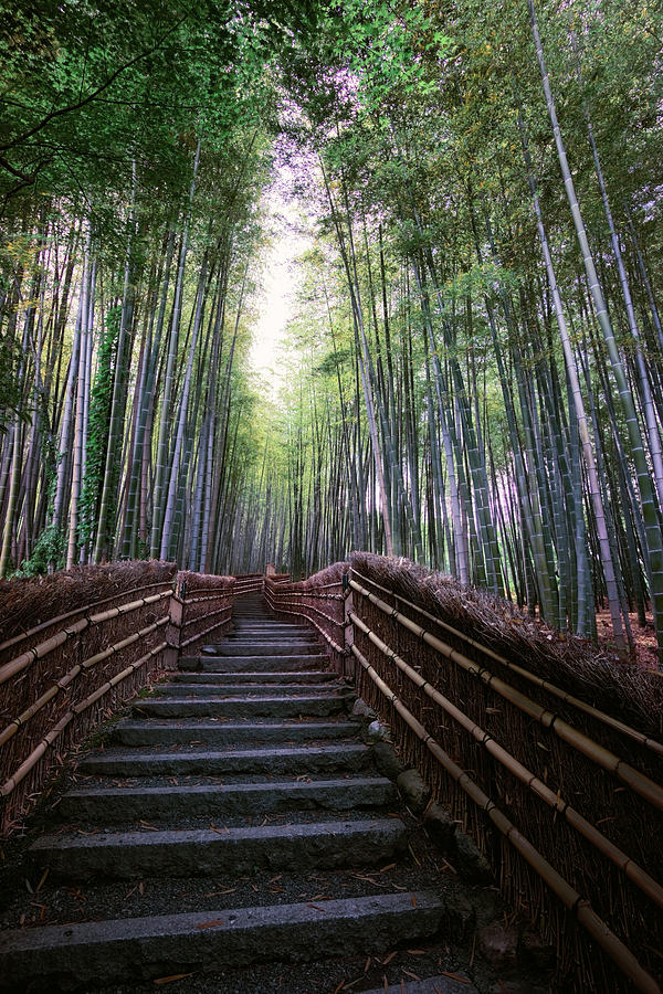 Bamboo Forest Of Japan Photograph