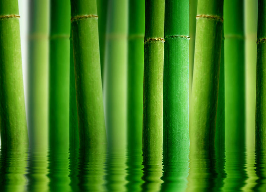 Bamboo Forest With Water Reflection Photograph