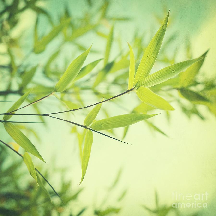 Bamboo In The Sun Photograph