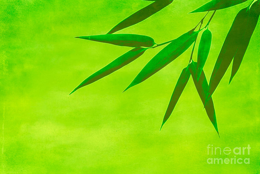Bamboo Leaves Photograph