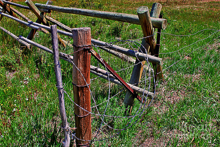 Barbed Wire Photograph