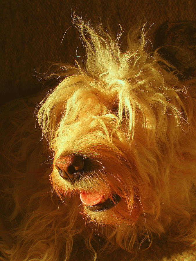Animal Photograph - Barber Wanted by Zsuzsa Balla
