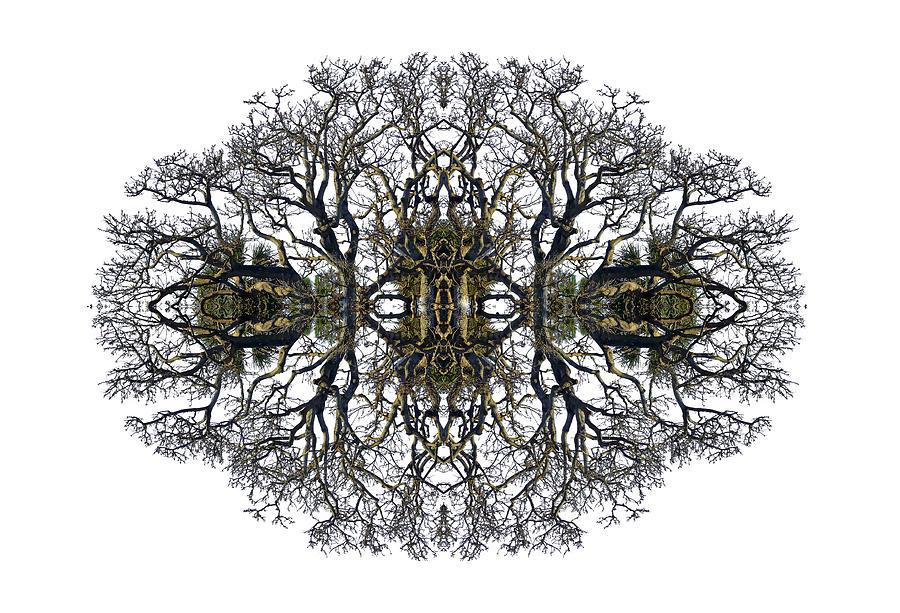 Tree Photograph - Bare Tree by Debra and Dave Vanderlaan