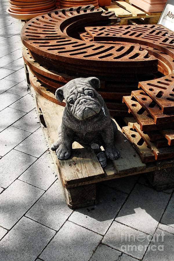 Dog Photograph - Bargain Sale by Menega Sabidussi