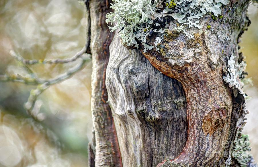 Bark And Bokeh Photograph  - Bark And Bokeh Fine Art Print