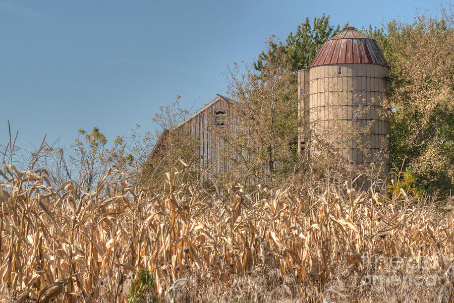 Barn And Silo Amid Cornstalks Photograph