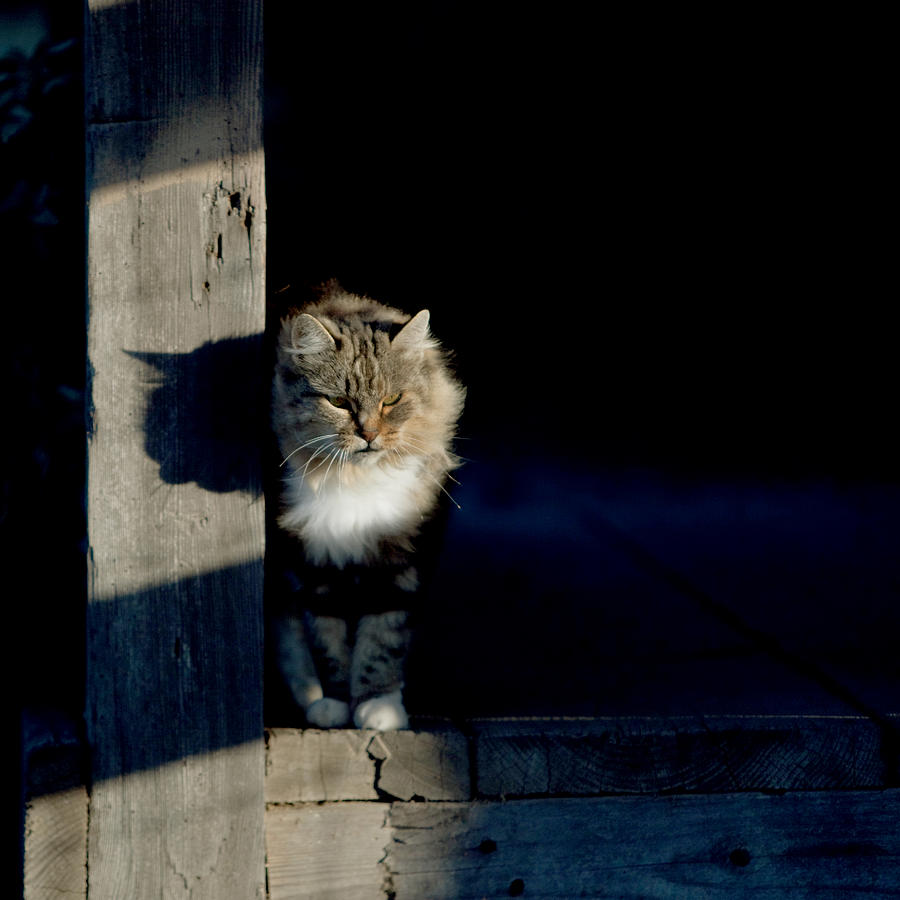 Cat Photograph - Barn Cat by Art Block Collections
