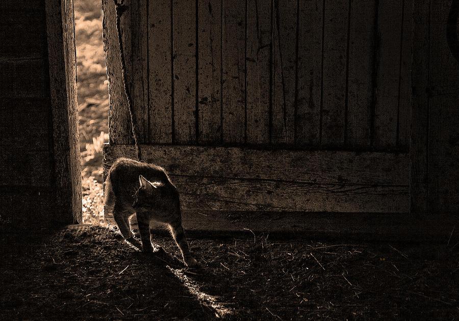 Cats Photograph - Barn Cat by Theresa Tahara