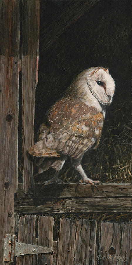 Barnowl Painting - Barn Owl In The Old Barn by Rob Dreyer AFC