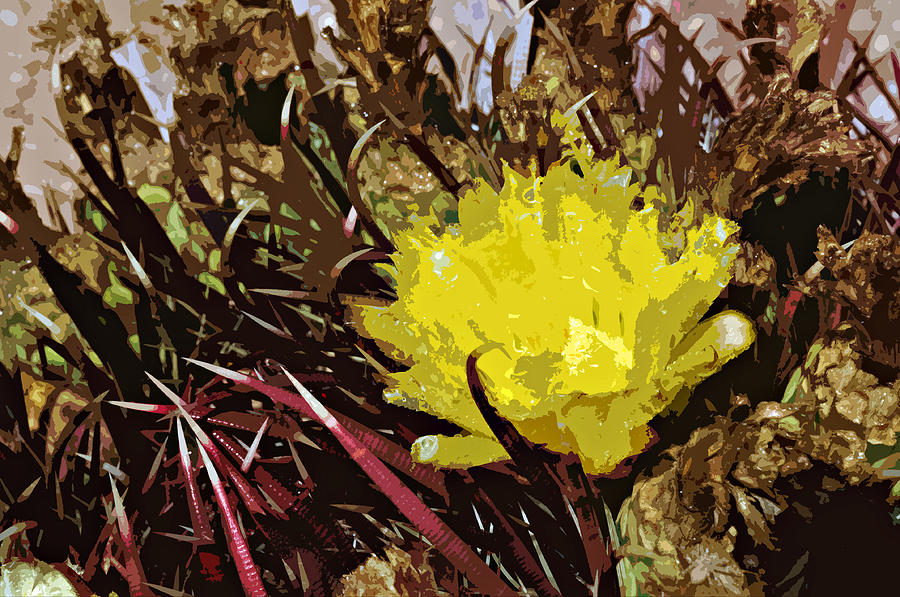 Barrel Cactus Bloom Photograph  - Barrel Cactus Bloom Fine Art Print