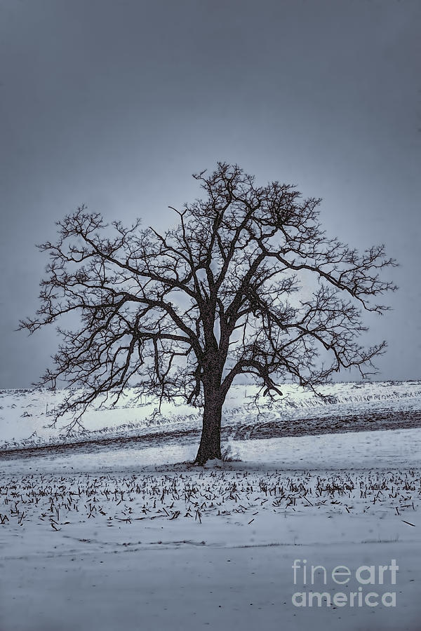 Barren Winter Scene With Tree Photograph