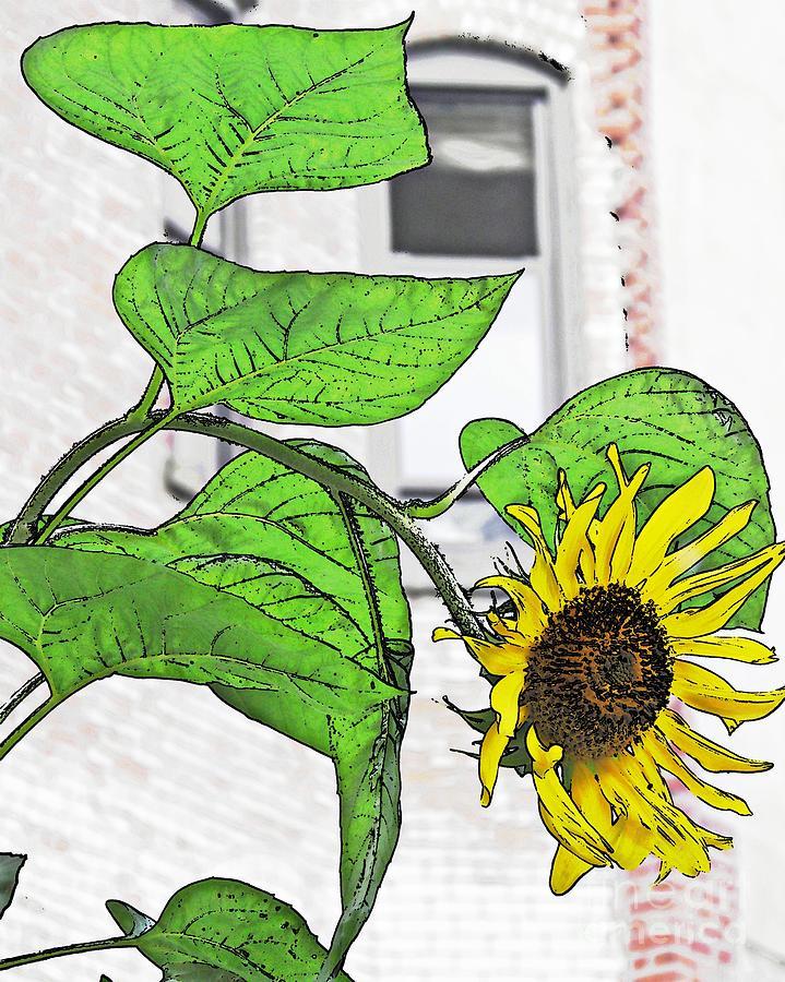 Barrio Sunflower Photograph