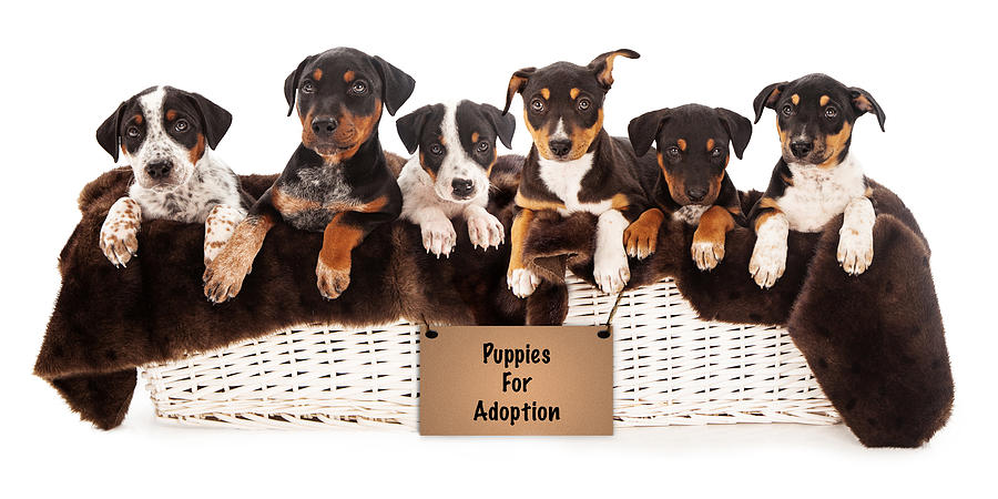 Basket Of Mixed Breed Puppies Photograph