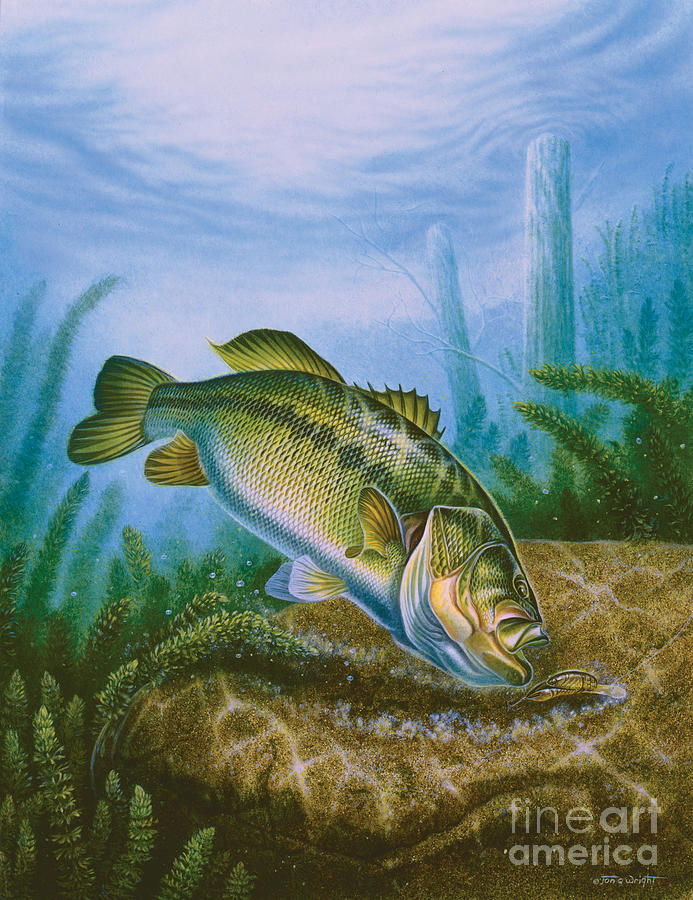 Bass And Crawdad Painting