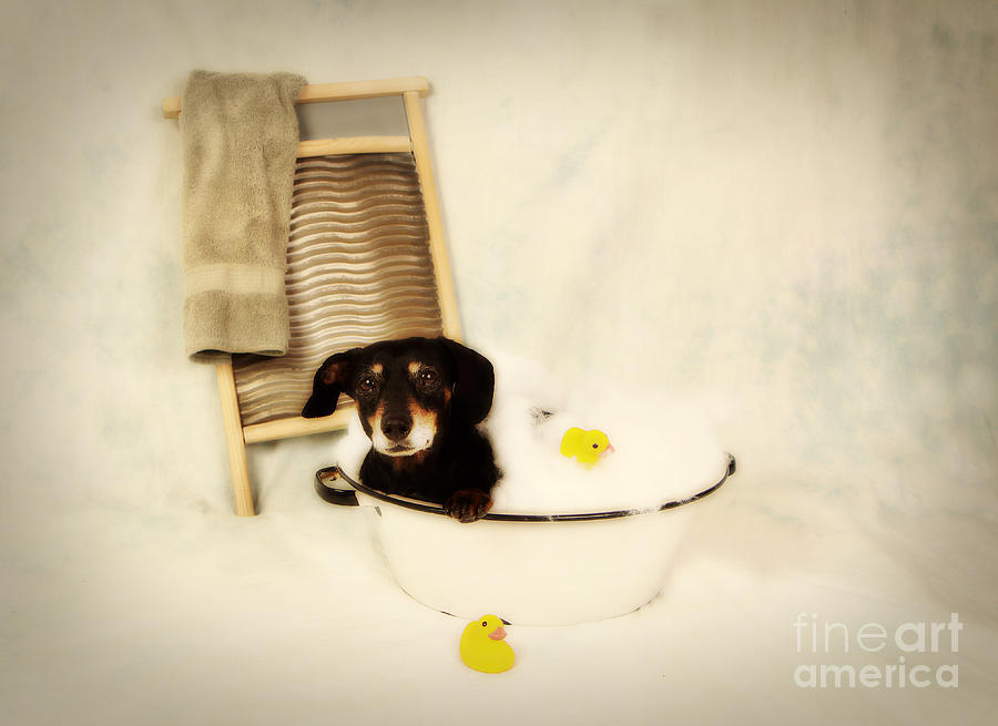 Bath Time Photograph  - Bath Time Fine Art Print