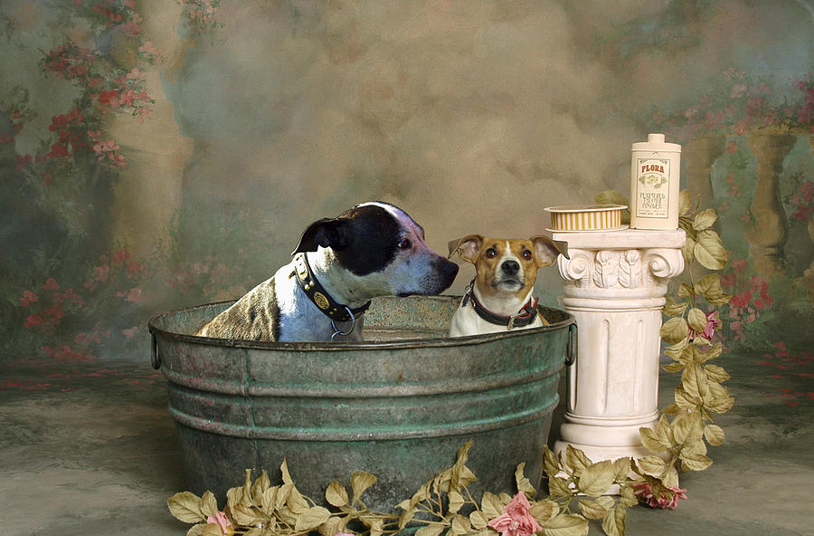 Bath Time Digital Art  - Bath Time Fine Art Print