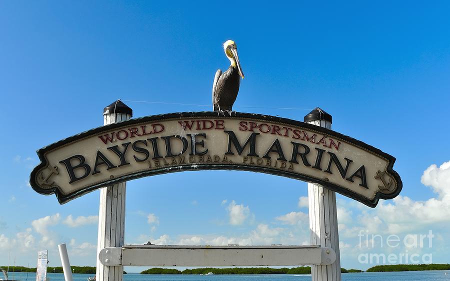 Bayside Marina Photograph