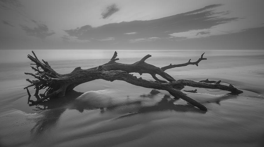 Clouds Photograph - Beach Bones by Debra and Dave Vanderlaan