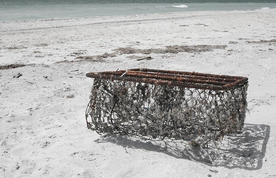 Beach Finds Photograph by Georgia Fowler