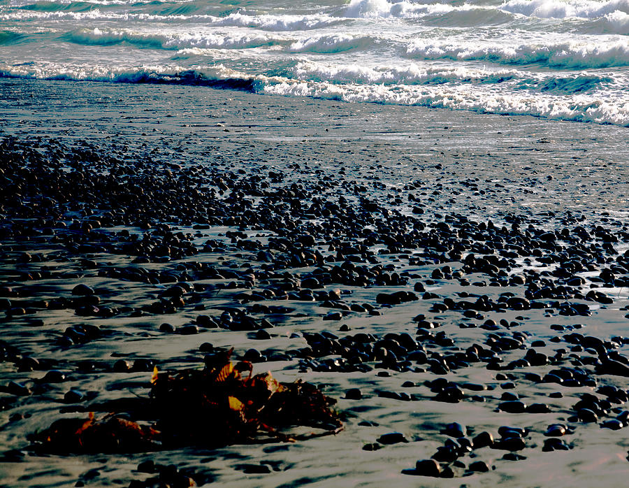 Beach Pebbles With Seaweed   Photograph