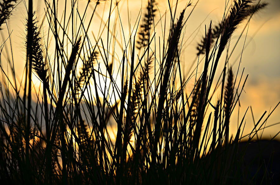 Beach Rise Photograph