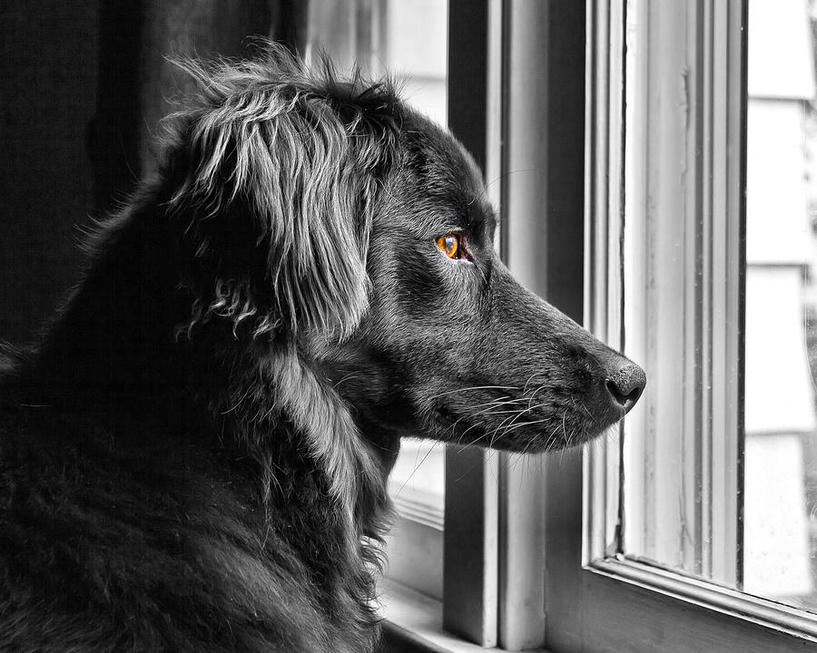 Dog Photograph - Bear At Window by Tim Buisman