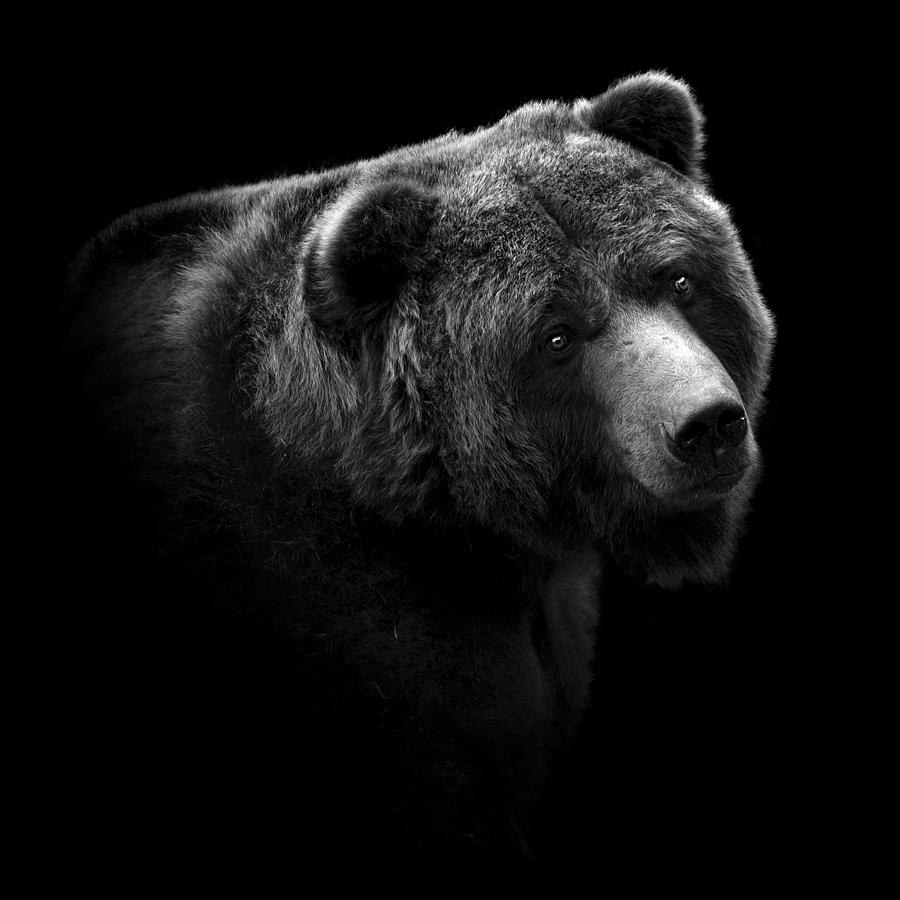 Black And White Bear : Portrait of bear in black and white photograph by lukas holas