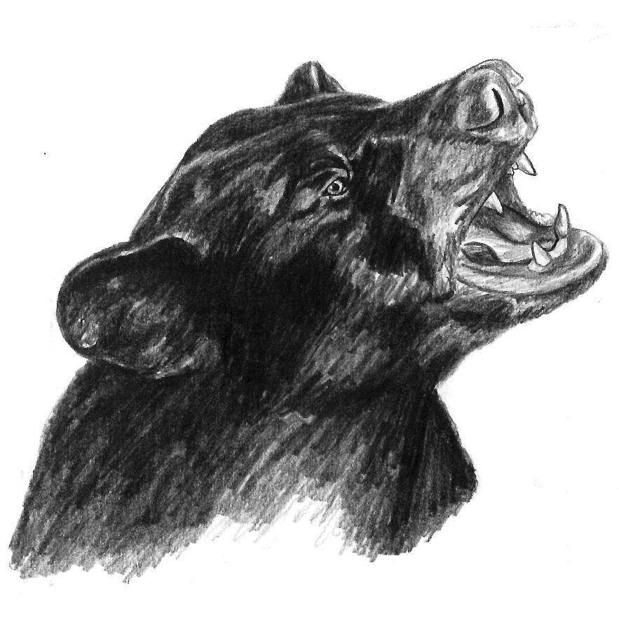 How To Draw a Bear  Drawing Pencil Sketches