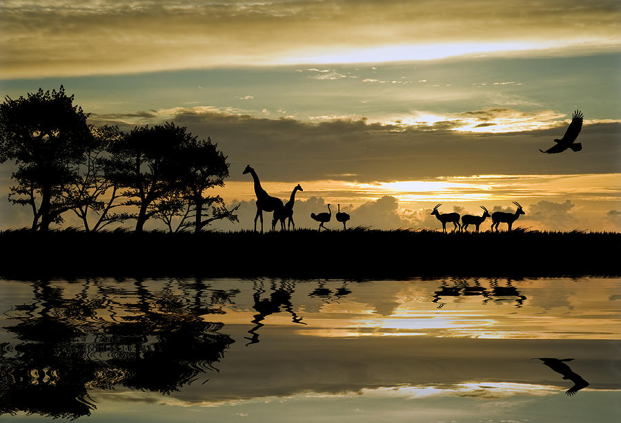 Beautiful african themed silhouette with stunning sunset for Animal wall mural