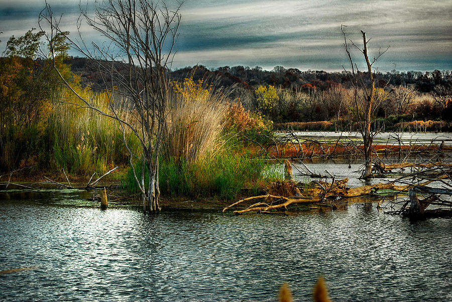 Beautiful Autumn Marsh Photograph  - Beautiful Autumn Marsh Fine Art Print