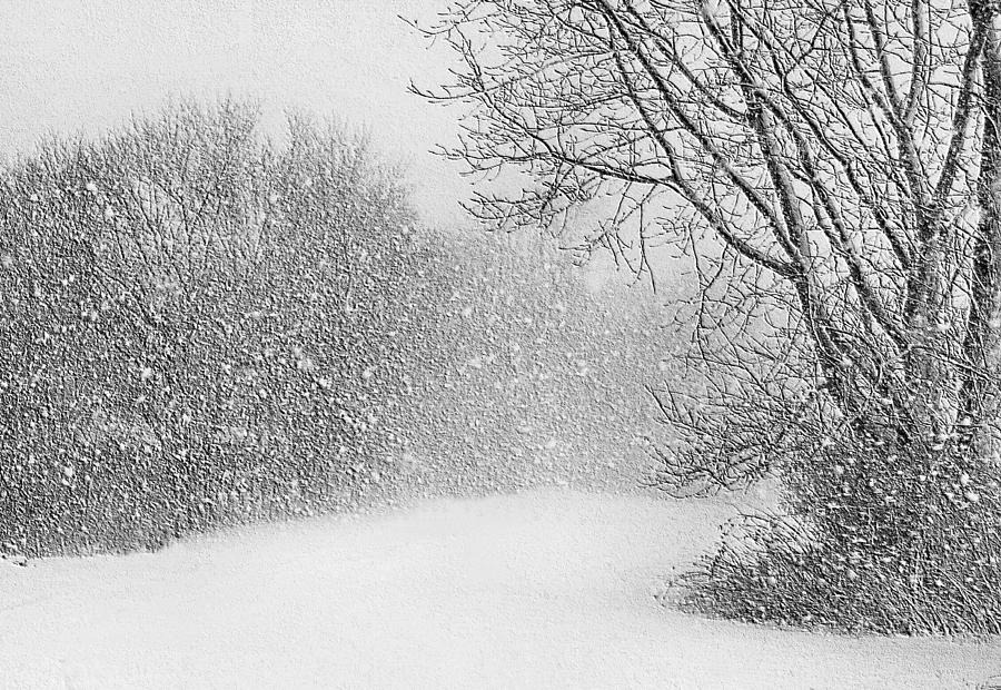 Beautiful Blizzard is a photograph by Kristin Elmquist which was ...