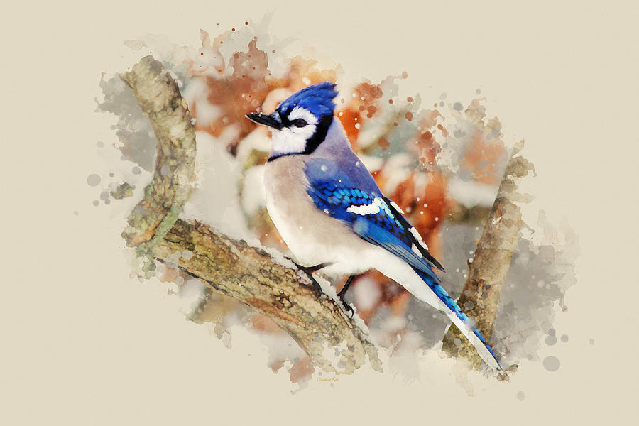 Blue Painting - Beautiful Blue Jay - Watercolor Art by Christina Rollo