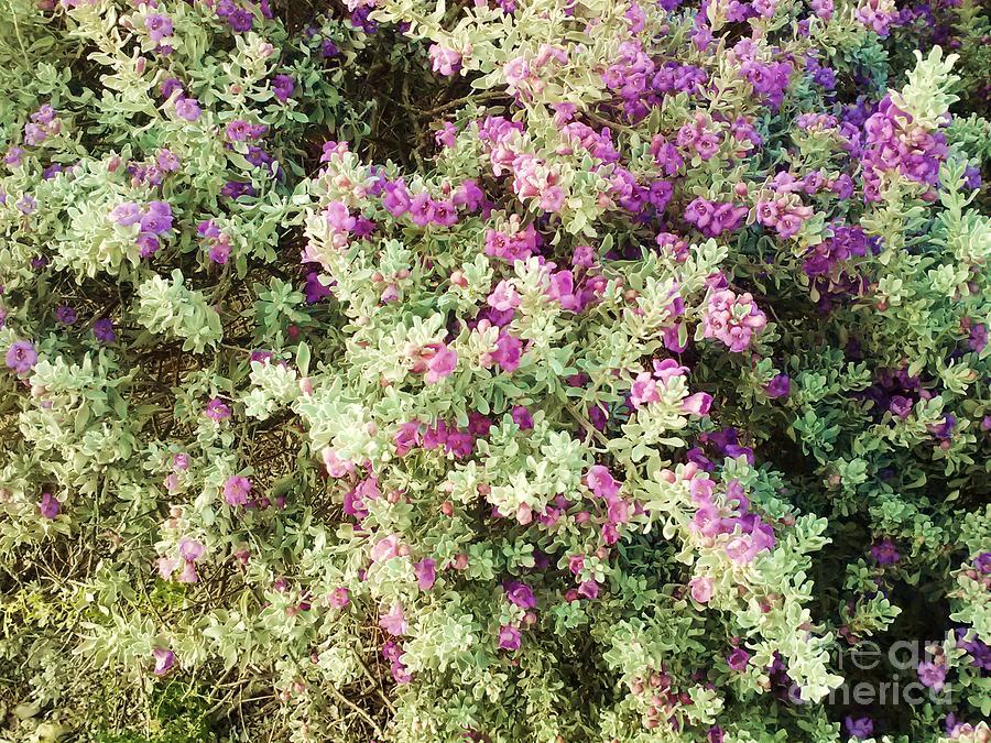 Beautiful Bush Photograph