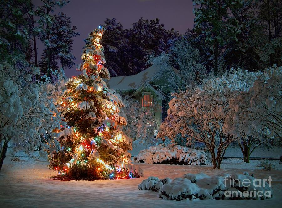 Beautiful Christmas Tree Lights Photograph