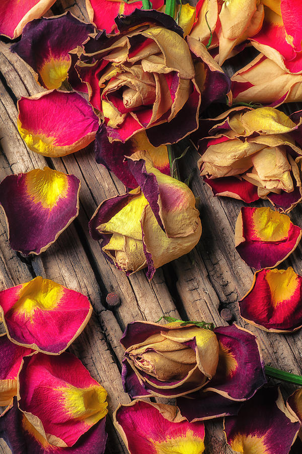 Dried Rose Photograph - Beautiful Decay by Garry Gay