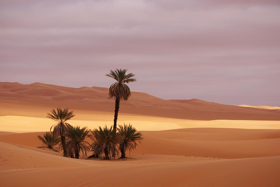 Beautiful Desert Photograph
