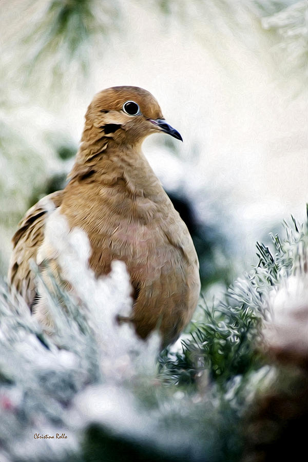 Beautiful Dove Photograph  - Beautiful Dove Fine Art Print