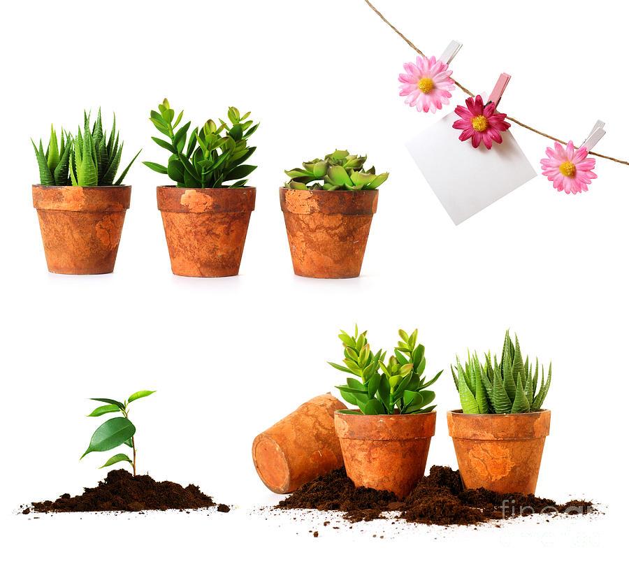 Beautiful Indoor Plants By Boon Mee