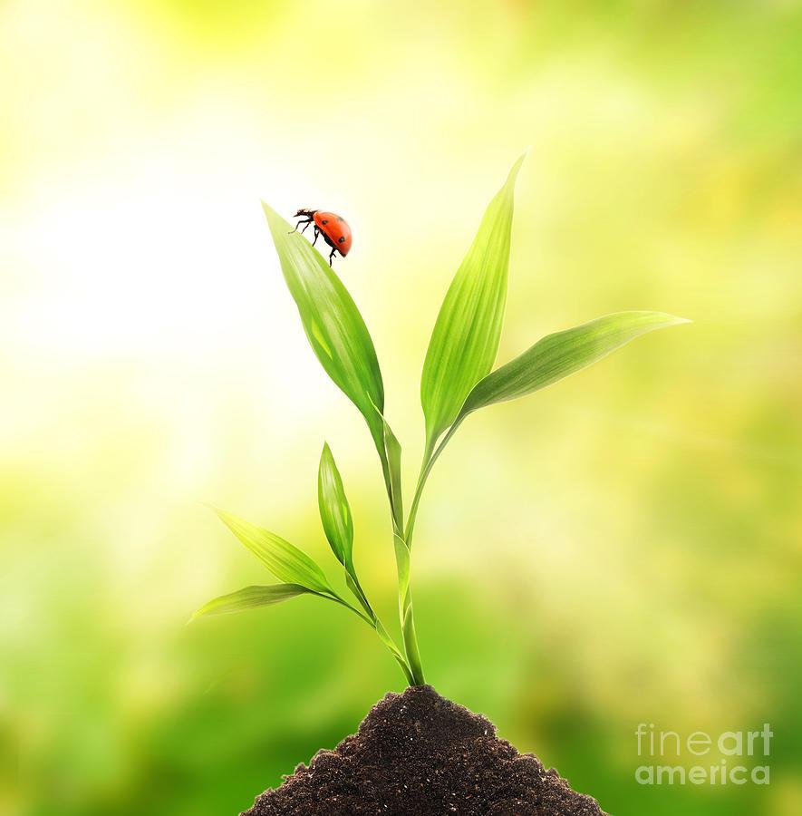 Beautiful Ladybug Photograph