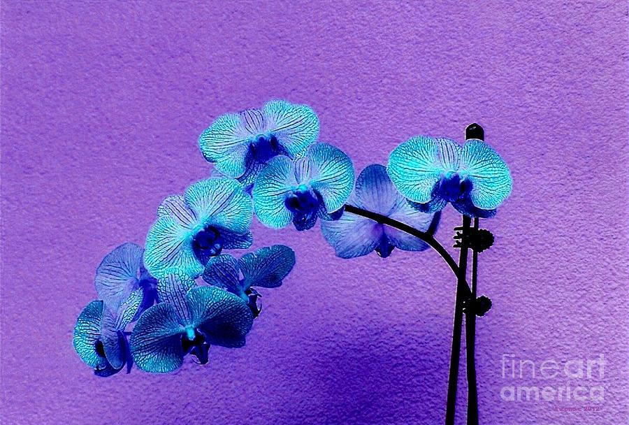 Beautiful Orchids Photograph