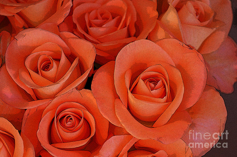 Beautiful Peach Roses 2 Digital Art