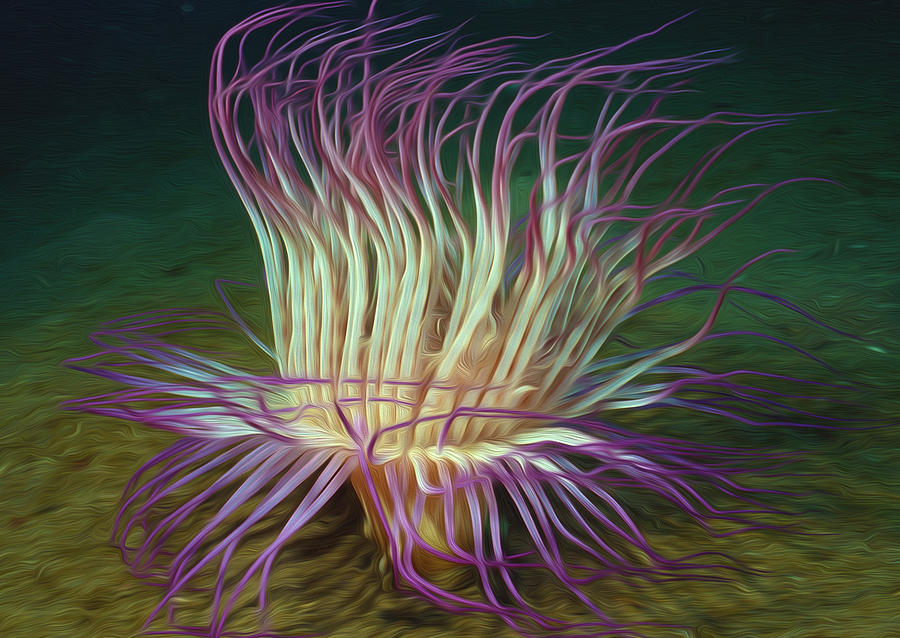 Beautiful Sea Anemone 1 Painting