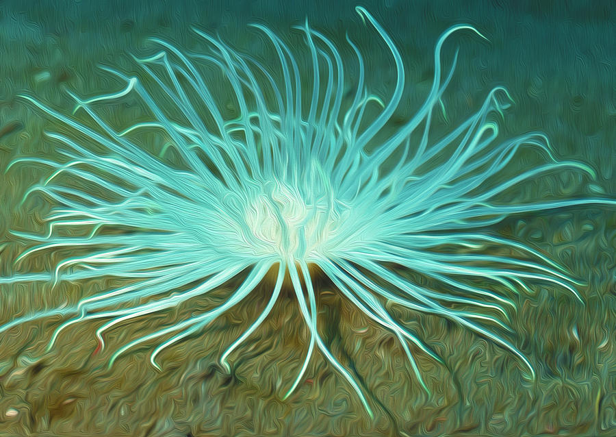 Beautiful Sea Anemone 2 Painting  - Beautiful Sea Anemone 2 Fine Art Print