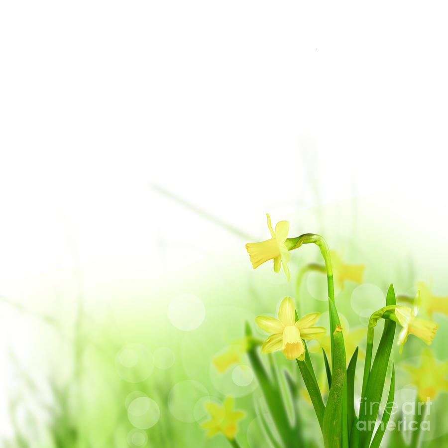 Beautiful Spring Flowers Photograph  - Beautiful Spring Flowers Fine Art Print