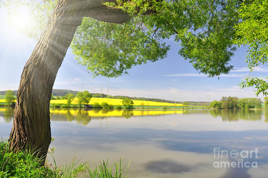 Beautiful Spring Landscape Photograph  - Beautiful Spring Landscape Fine Art Print