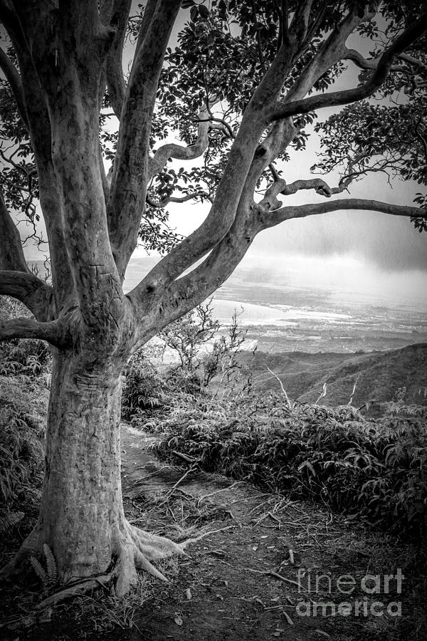 Beautiful Tree Looking Down On A Tropical Valley Photograph